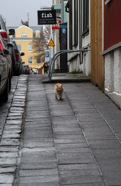 fish- Reykjavik Iceland. lol that cat must have had a good meal