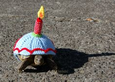 Birthday turtle !
