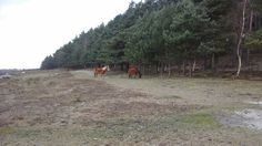 Out and about in the New Forest