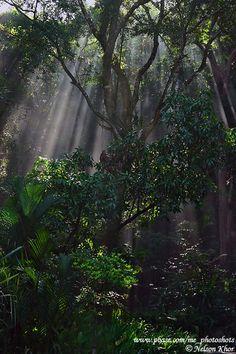 Penang Island, Tropical Spice Garden