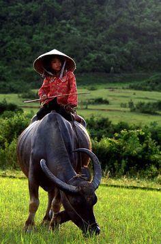Photograph Taken in Vietnam By: © Bao Thach Nguyen.