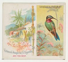 Schreiber's Hummingbird, from Birds of the Tropics series (N38) for Allen & Ginter Cigarettes, 1889. The Metropolitan Museum of Art, New York. The Jefferson R. Burdick Collection, Gift of Jefferson R. Burdick (63.350.202.38.38)