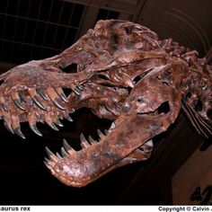 Why are dinosaurs extinct? - News - Bubblews