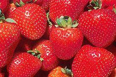 Growing strawberries in Michigan gardens