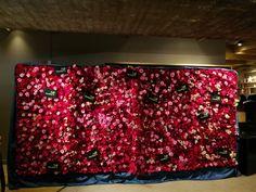 Blomstervegg, skjønnheten og udyret