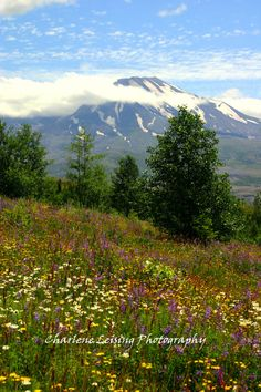 Mt. St. Helens Washington  Fine Art  by CharleneLeisingPhoto, $10.00
