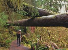 Olympic Peninsula | Hoh Rainforest | Monica Miyagi