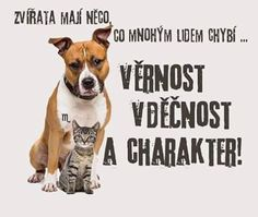 Story Quotes, Proverbs, True Stories, Motto, Pitbulls, Motivational Quotes, Wisdom, Humor, Sayings