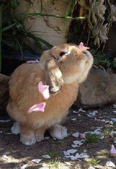Bunny rabbit and flower petals