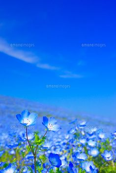 Forest Flowers, Tulip Bouquet, Frame Background, Pink Tulips, Flower Quotes, Blue Wallpapers, Fantastic Art, Japanese Culture, Flower Power