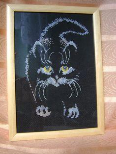 kotek na czarnym tle