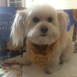 Chilly the adorable dog getting ready for Passover!