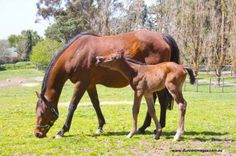 Caption this Photo - what is the foal saying?