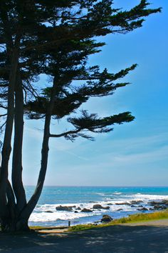 I Cambria -- a must stop while traveling California's central coast! Also, a MUST stay for several days! Places In California, California Camping, California Dreamin', Pismo Beach, The Places Youll Go, Places To Go, Cambria California, Moonstone Beach, Camping In North Carolina