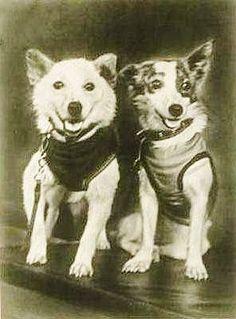 Russian Space dogs Strelka & Belka in 1960