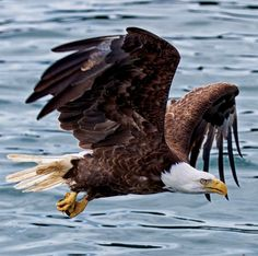 Bald Eagle, Sky, Bird, Art Work, Closer, Opportunity, Wings, Join, Shapes