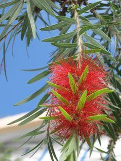 Escova de Garrafa - Imagens de Flores http://www.imagensdeflores.com/