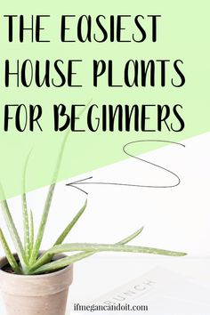 Easiest House Plants You (Probably) Won't Kill Hobbies For Adults, Hobbies To Try, College Necessities, Detox Your Home, Easy House Plants, What To Do When Bored, Corn Plant, Air Plant Display, Floor Plants