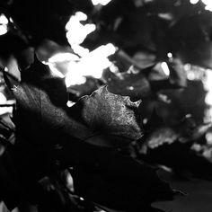 #analog #analogfilm #analogcamera #analogvibes #analogphotography #analogphoto #film #filmcommunity #filmphotography #filmsociety #filmshooter #nature #naturephotography #nature_photo #photo Film Photography, Nature Photography, Nature Photos, My Arts, Instagram, Nature Pictures, Wildlife Photography, Cinematic Photography