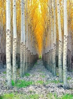 Aspen Cathedral | See More Pictures