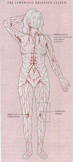 Diagram Of The Lymph Nodes Lymph Nodes In Body Diagram