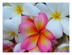 Heavenly_by_FNQ.jpg 850×653 pixels