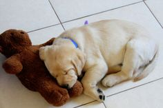 Naptime With Your Buddy