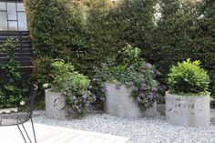 Concrete drainage pipes make excellent planters for citrus trees, heliotropes and herbs.