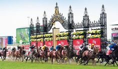 www.horsealot.com, the equestrian social network for riders & horse lovers | Horseracing : Melbourne Cup Carnival.