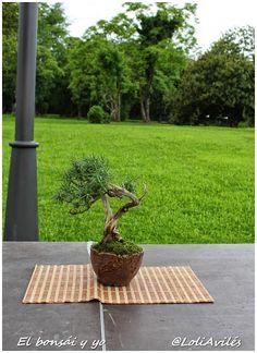 El bonsái y yo: Muestra de bonsái en el Parque Munoa