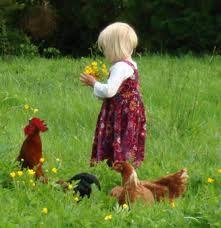 høner og hage - Google-søk