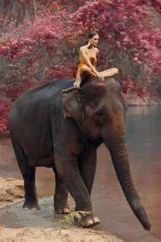 Oh, to ride an elephant!