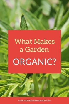 Learn what makes a garden organic and how organic gardening is different than conventional gardening.   Home for the Harvest Fall Vegetables, Organic Vegetables, Growing Vegetables, Veggies, Garden Pests, Garden Tools, Box Garden, Dream Garden, Garden Ideas