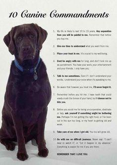 10 Canine Commandments. :...(