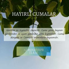 Plant Leaves, Islam, Messages, Day, Plants, Faith, Texting, Flora, Muslim