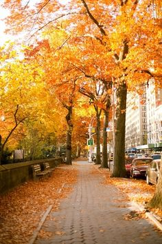 autumn | fall | leaves | colors