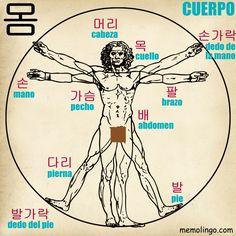 Lista de vocabulario de coreano con las principales partes del cuerpo humano.