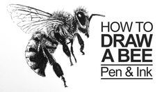 Learn how to draw a bee with pen and ink in this lesson. a bee Bee Drawing, Plant Drawing, Drawing Sketches, Rabbit Drawing, Drawing Faces, Drawing Stuff, Ink Pen Drawings, Realistic Drawings, Animal Drawings