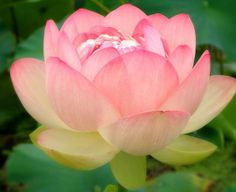 Understanding your Light Spring look - Truth is Beauty