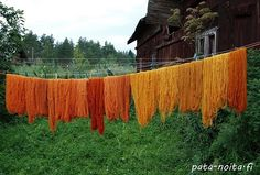 Dyed with peel of onion and left with madder. - love the orange gradients contrasted with green and brown.