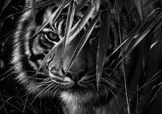 Mens Tiger Tattoo, Log Projects, Animales