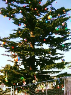 Every Christmas, you'll find an amazingly large Christmas tree right by the ocean in Ocean Beach. The holidays are always festive for this beach town in California.