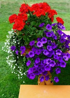See amazing before and after photos from spring to summer plants. Includes a pin. See amazing before and after photos from spring to summer plants. Includes a pin it image for an easy watering and fertilizing schedule. Container Flowers, Flower Planters, Flower Pots, Geranium Planters, Flower Ideas, Full Sun Container Plants, Succulent Containers, Outdoor Flowers, Outdoor Planters