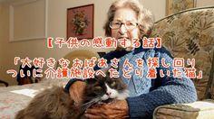 【1分涙腺崩壊】「大好きなおばあさんを探し回りついに介護施設へたどり着いた猫」【猫の感動する話】