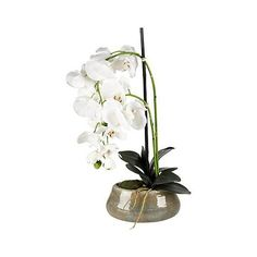 """White 21"""" High Faux Orchids in Beige Ceramic Pot (€21) ❤ liked on Polyvore featuring home, home decor, floral decor, white ceramic pot, artificial orchid arrangement, artificial arrangement, orchid pots and ceramic orchid pots"""