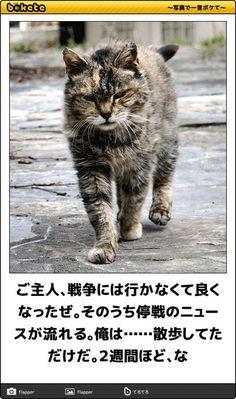 猫bokete(ボケて)秀逸ボケ - NAVER まとめ Naver, Funny Pictures, Geek Stuff, Cats, Animals, Fanny Pics, Geek Things, Gatos, Animales