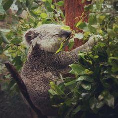 Darling Harbour Zoo, Sidney (Australia) ... cheap hotels in #Sidney #Australia http://holipal.com/hotels/