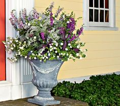 Silver Elegance Annual Collection -White (PP 15,492), trailing Tradescantia 'Purple Queen', the silvery magnificence of Centaurea 'Colchester White', and the colorful spikes of both Angelonia AngelMist™ Plum and Purple Stripe. Two Petunias and one each of the other varieties; six plants total.