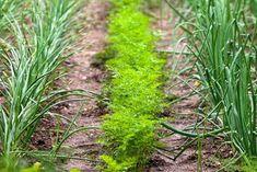 Vegetable Garden, Herbs, Vegetables, Plants, Sad, Gardening, Vegetables Garden, Lawn And Garden, Herb