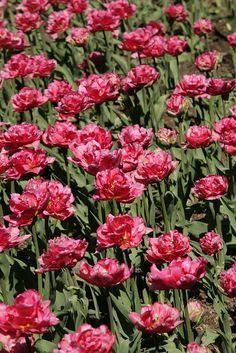 Emmetts in Spring